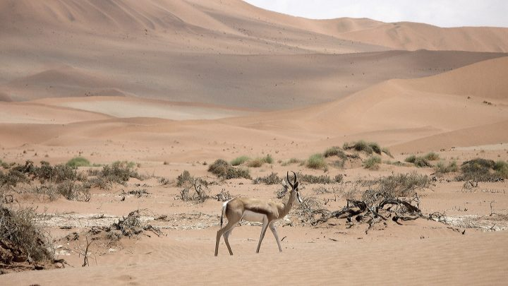Namibia: Sustainable tourism development through leadership